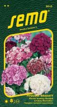 HOBBY, Květiny trvalky - Hvozdík bradatý směs, 9615 (Dianthus barbatus)