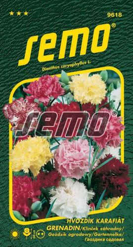 HOBBY, Květiny trvalky - Hvozdík karafiát Grenadin, 9618 (Dianthus caryophyllus)