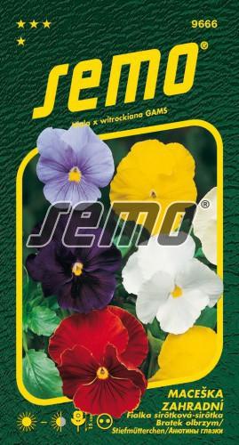 HOBBY, Květiny trvalky - Maceška zahradní velkokvětá směs bez oka, 9666 (Viola x witrockiana)
