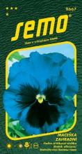HOBBY, Květiny trvalky - Maceška zahradní velkokvětá modrá, 9667 (Viola x witrockiana)