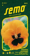 HOBBY, Květiny trvalky - Maceška zahradní velkokvětá oranžová, 9670 (Viola x witrockiana)