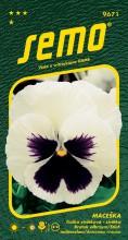 HOBBY, Květiny trvalky - Maceška zahradní velkokvětá bílá, 9671 (Viola x witrockiana)