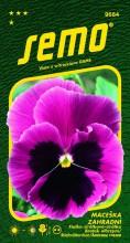 HOBBY, Květiny trvalky - Maceška zahradní velkokvětá Mistral S1 růžová s okem, 9684 (Viola x witrockiana)