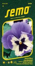 HOBBY, Květiny trvalky - Maceška zahradní velkokvětá Glacier Ice Violet White, 9686 (Viola x witrockiana)