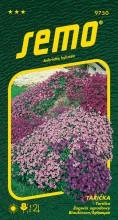 HOBBY, Květiny trvalky - Tařička směs, 9750 (Aubrieta hybrida)