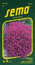 HOBBY, Květiny trvalky - Tařička Leichtlinii, 9751 (Aubrieta hybrida)