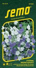 HOBBY, Květiny trvalky - Zvonek broskvolistý směs barev, 9760 (Campanula parsicifolia)