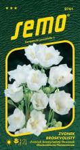 HOBBY, Květiny trvalky - Zvonek broskvolistý bílý, 9761 (Campanula parsicifolia)