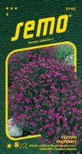 HOBBY, Květiny trvalky - Hvozdík slzička Maiden Pink, 9790 (Dianthus deltoides)