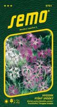 HOBBY, Květiny trvalky - Hvozdík pyšný Spooky Mix, 9791 (Dianthus superbus L.)