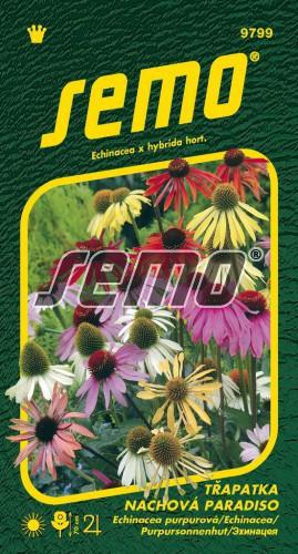 HOBBY, Květiny trvalky - Třapatka nachová Paradiso, 9799 (Echinacea x hybrida)