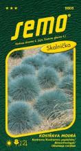 HOBBY, Květiny trvalky - Kostřava modrá Varna, 9805 (Festuca cinerea)