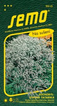 HOBBY, Květiny trvalky - Suchobýl tatarský (statice tatarika) bílý, 9810 (Goniolimon tataricum)