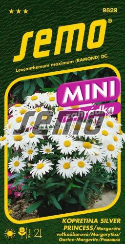 HOBBY, Květiny trvalky - Kopretina bílá Silver Princess, 9829 (Chrysanthemum maximum)