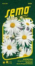 HOBBY, Květiny trvalky - Kopretina bílá Shasta Daisy, 9830 (Chrysanthemum leucanthemum)
