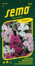 HOBBY, Květiny trvalky - Hrachor širokolistý směs barev, 9836 (Lathyrus latyfolius)