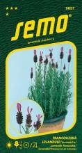 HOBBY, Květiny trvalky - Levandule Francouzská levandule, 9837 (Lavandula stoechas)