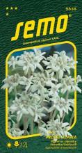 HOBBY, Květiny trvalky - Protěž alpská Edelweiss, 9838 (Leontopodium alpinum)