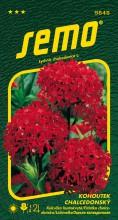 HOBBY, Květiny trvalky - Kohoutek chalcedonský červený, 9848 (Lychnis chalcedonica)