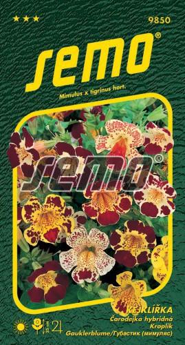 HOBBY, Květiny trvalky - Kejklířka velkokvětá, 9850 (Mimulus tigrinus)