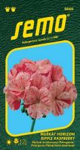 HOBBY, Květiny trvalky - Muškát páskatý Horizon Ripple Raspberry, 9859 (Pelargonium zonale)
