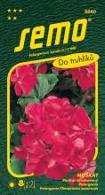 HOBBY, Květiny trvalky - Muškát páskatý červený, 9860 (Pelargonium zonale)