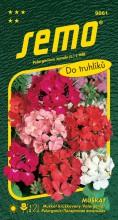 HOBBY, Květiny trvalky - Muškát páskatý směs, 9861 (Pelargonium zonale)