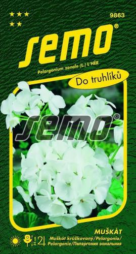 HOBBY, Květiny trvalky - Muškát páskatý bílý, 9863 (Pelargonium zonale)