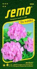 HOBBY, Květiny trvalky - Muškát páskatý růžový, 9864 (Pelargonium zonale)