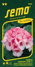 HOBBY, Květiny trvalky - Muškát páskatý Horizont Star F1, 9865 (Pelargonium zonale)