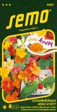 HOBBY, Květiny letničky - Lichořeřišnice větší Jedlé květy, 9550 (Tropaeolum majus)