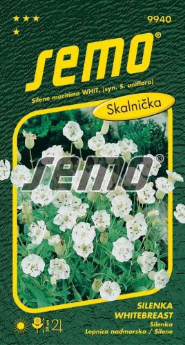 HOBBY, Květiny trvalky - Silenka Whitebreast, 9940 (Silene maritima)