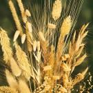HOBBY, Květiny letničky – Směs letniček dekorační trávy, 9955