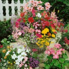 HOBBY, Květiny letničky – Směs letniček pro balkony, 9960
