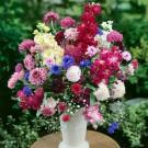 HOBBY, Květiny letničky – Směs letniček křezu, 9970