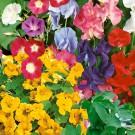 HOBBY, Květiny letničky – Směs letniček popínavé, 9980