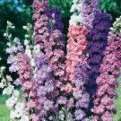 HOBBY, Květiny letničky – Ostrožka Stračka Honour Mix, 9191