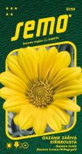 HOBBY, Květiny letničky - Gazánie zářivá Talent Yellow, 9259 (Gazania splendens)