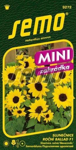 HOBBY, Květiny letničky - Slunečnice roční Ballad F1, 9272 (Helianthus annuus)