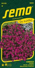 HOBBY, Květiny letničky - Lobelka Cascade červená, 9391 (Lobelia pendula)