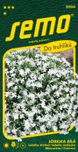 HOBBY, Květiny letničky - Lobelka bílá, 9394 (Lobelia erinus)