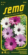 HOBBY, Květiny letničky - Osteospermum Balade mix, 9433 (Osteospermum ecklonis)