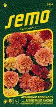 HOBBY, Květiny letničky - Aksamitník rozkladitý Strawberry Blonde, 9507 (Tagetes patula L.)