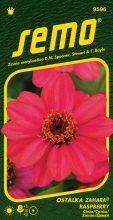 HOBBY, Květiny letničky - Ostálka Zahara Raspberry, 9596 (Zinnia haageana)