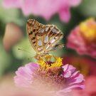 HOBBY, Květiny letničky – Směs pro motýly, 9947