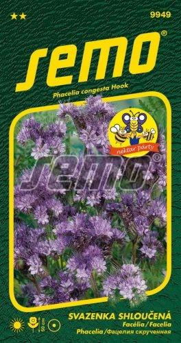 HOBBY, Květiny letničky - Svazenka shloučená Fiona, 9949 (Phacelia congesta)