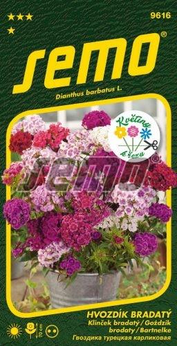 HOBBY, Květiny trvalky - Hvozdík bradatý Fragrance, 9616 (Dianthus barbatus L.)