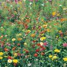 HOBBY, Květiny letničky – Nízký květinový koberec, 9986