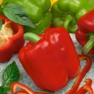 Zelenina SEMO - široký výběr osiva a semen zeleniny z naší produkce