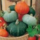 Kolekce osiva SEMO - speciální kolekce zeleniny a květin